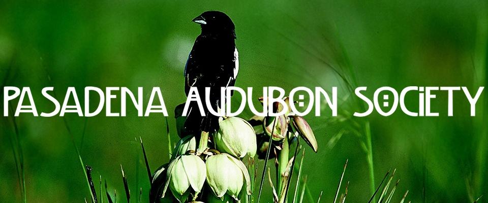Pasadena Audubon Society