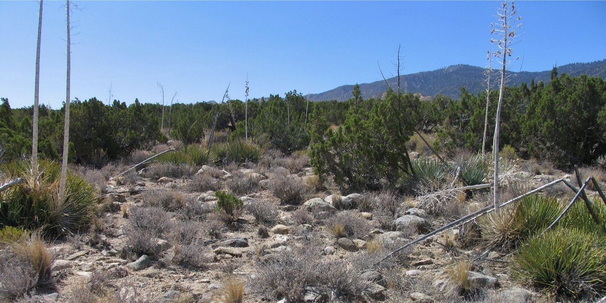 Piñon Hills Reserve
